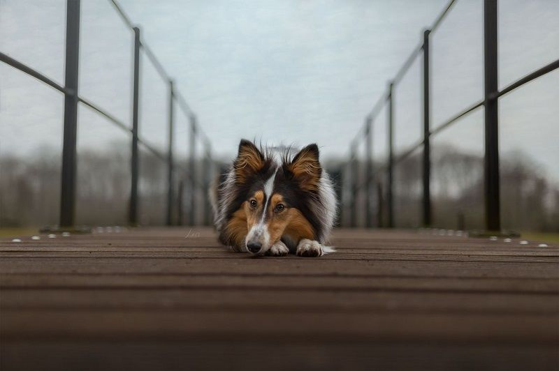 dieren, dierenfoto's, dierenfotografie, lezersgallery, spotlight, community stories, inspiratie